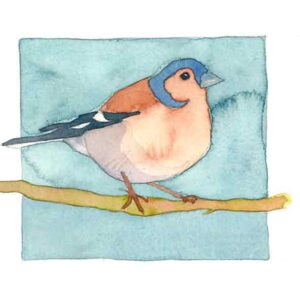 Chaffinch Limited Edition Print-0